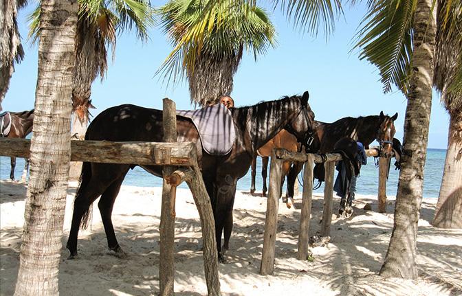 1377743018_pic_Horsebackridingpuntacana.jpg