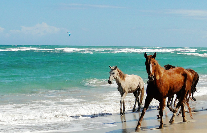 1403385801_pic_Horsebackridingpuntacana4.jpg