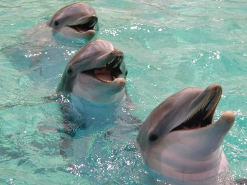 1408397107_pic_most-intelligent-animals-in-the-world-bottlenose-dolphin.jpg
