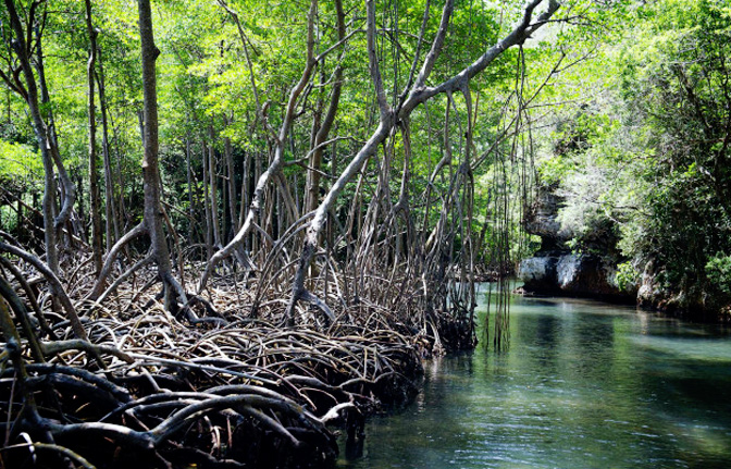 National Park Los Haitises Bayahibe Dominican Republic Excursions